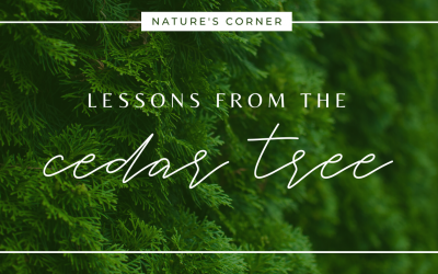 Lessons From The Cedar Tree